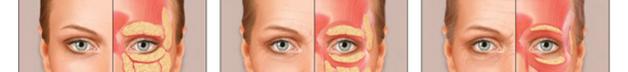 Анатомическaя основa
